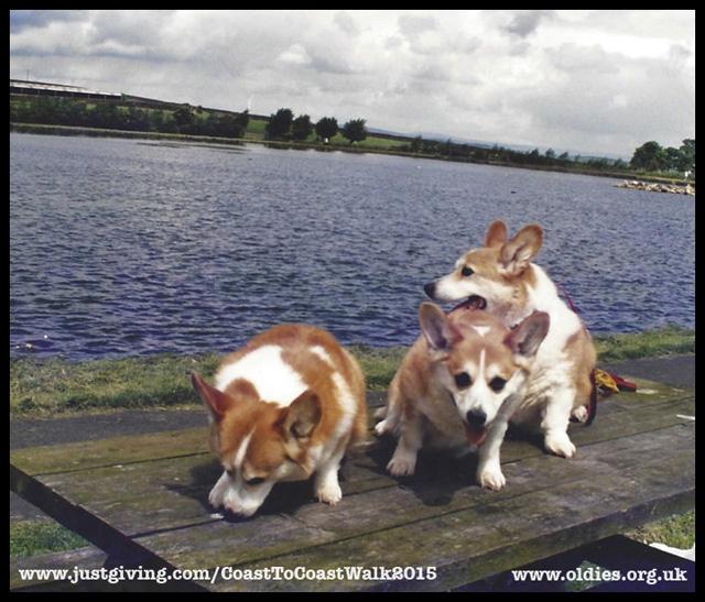 Ray, Corgis, sponsored walk, Oldies Club, rescue dogs, coast to coast