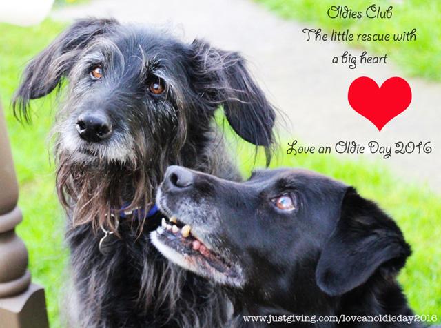 Love an Oldie Day 2016 Cassie & Scruffy
