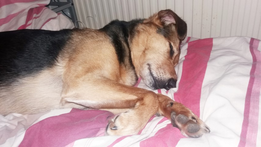 rehoming barney 4 (Small)