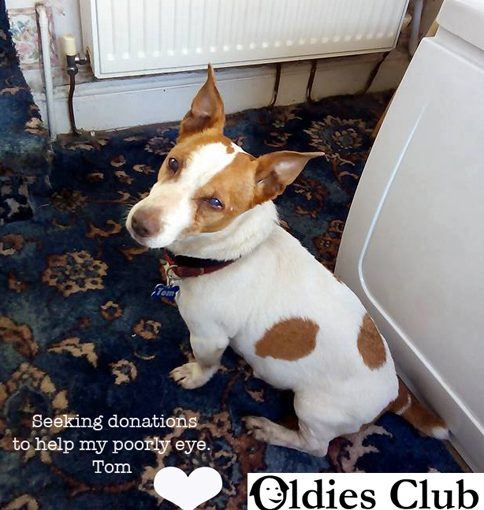 Tom, Oldies Club, sponsor dog, rescue, fundraising