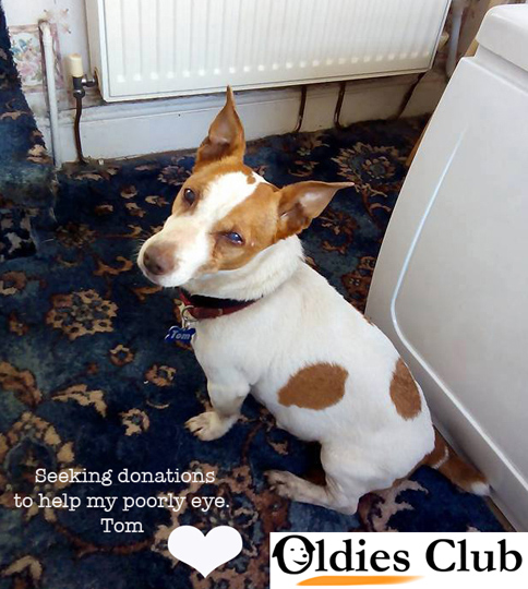 Tom, Oldies Club, sponsor dog, rescue, fundraising