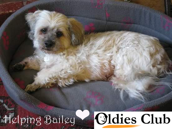 Bailey, Oldies Club, rescue dog, Lhasa Apso