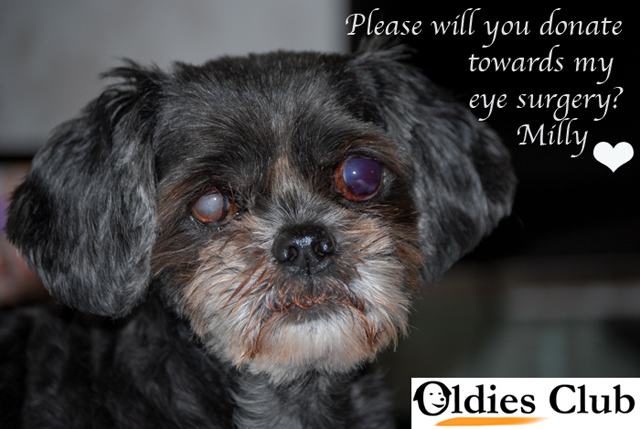Milly, Oldies Club, dog rescue, rescue dog, fundraising