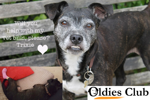 Trixie, Oldies Club, rescue dog, teefs