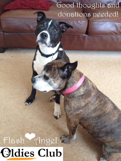 Flash and Angel, sofa hounds