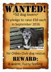 Wanted Oldies Club £50 pledge, rescue dogs, dog rescue