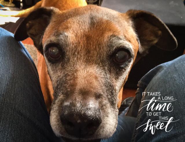 Marti, Oldies Club, sponsor dog, rescue dog