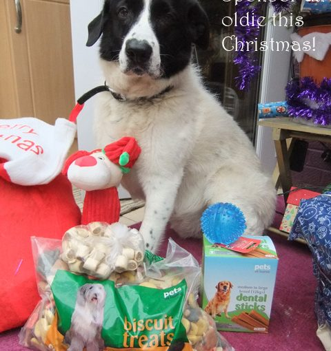 Christmas sponsor dog, Oldies Club