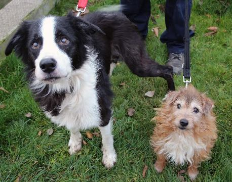 Shadow (left) and Charlie (right): An adorable pair of oldies!