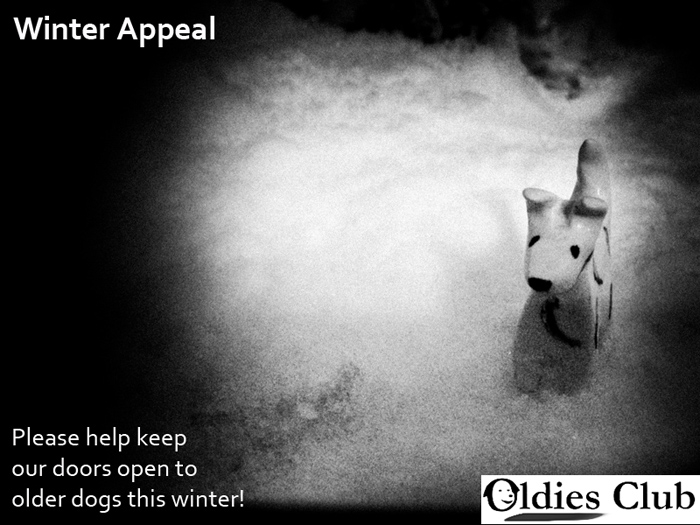 Oldies Club, Winter Appeal, senior dogs, dog rescue