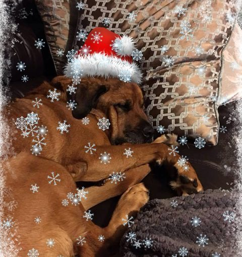 Christmas, sponsor dog, dog rescue
