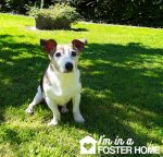 Oldies Club foster dog Toby dog rescue September pledge
