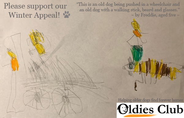 Oldies Club, dog rescue, fundraising, winter appeal, dogs, rescue dogs, dog lovers, senior dogs