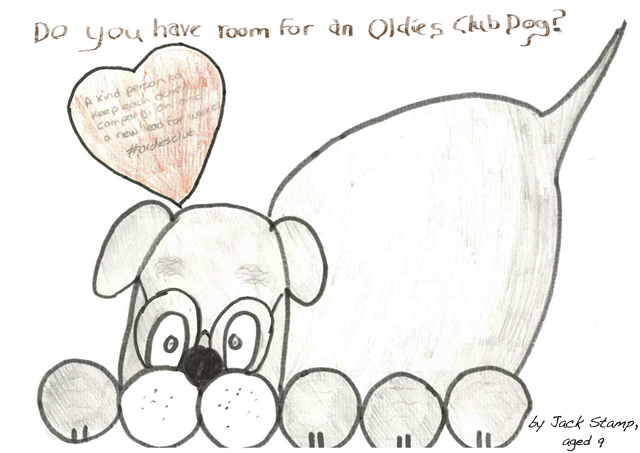 Oldies Club, Winter Appeal, rescue dogs, dog rescue, fundraising, senior dogs, donations