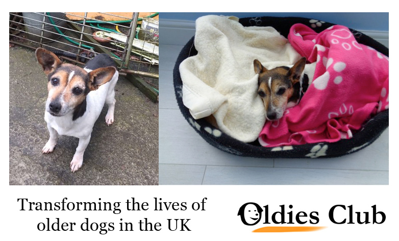 Oldies Club, dog rescue, rescue dog, JRT, Winter Appeal, oldie, senior dog, dog adoption, donation