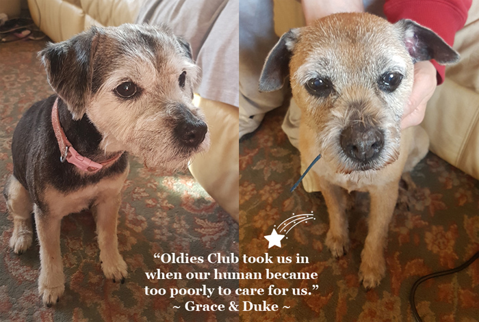 Oldies Club, Winter Appeal, fundraising, dog rescue, rescue dog, senior dog, border terrier