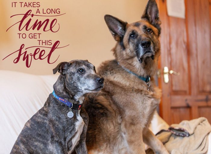 Oldies Club, senior dogs, Valentine's Day, Love an Oldie Day, dog rescue, rescue dogs, foser, adopt