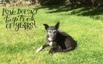 Layla, Oldies Club, senior dogs, dog rescue, fundraising, auction